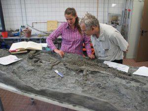 Rhaeticosaurus mertensi - cea mai veche fosila din lume
